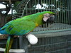 Confiscated_parrots_014_4